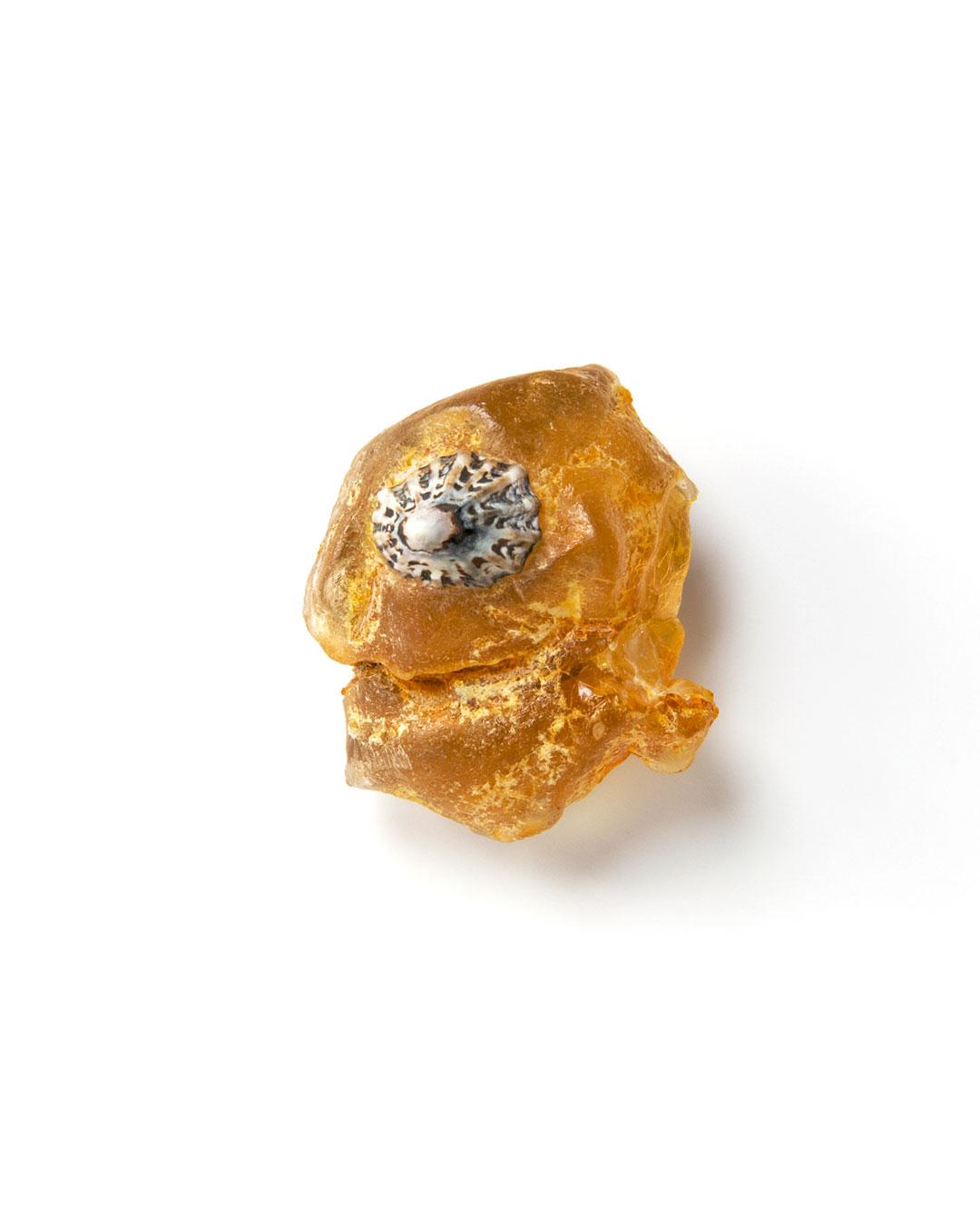 Otto Künzli, Quidam XI, 2017, brooch; amber, patellidae, MDF, silver, 42 x 37 x 19 mm, €3900